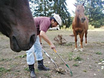 horses_4x
